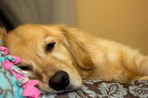 Dozing Off by JenFruzz