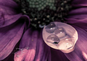 Vintage Drops by JenFruzz