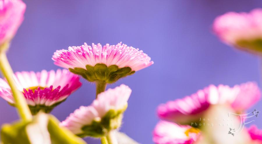 Signs of Spring by JenFruzz