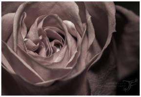Rose by JenFruzz