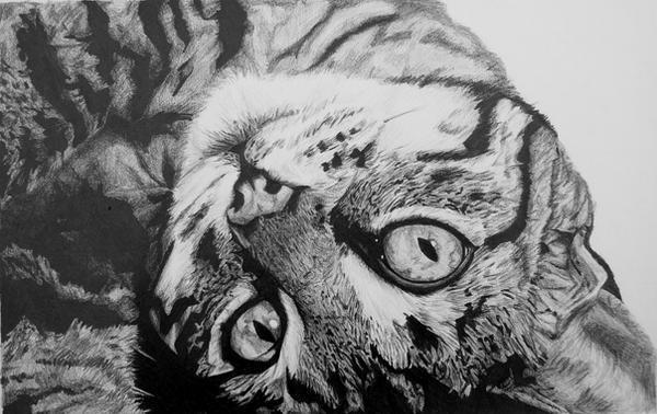 Cat by InjectVibrancy