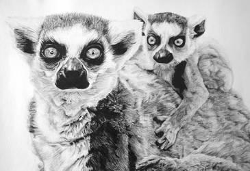 Ringtail Lemur by InjectVibrancy