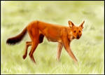 Dhole Painting