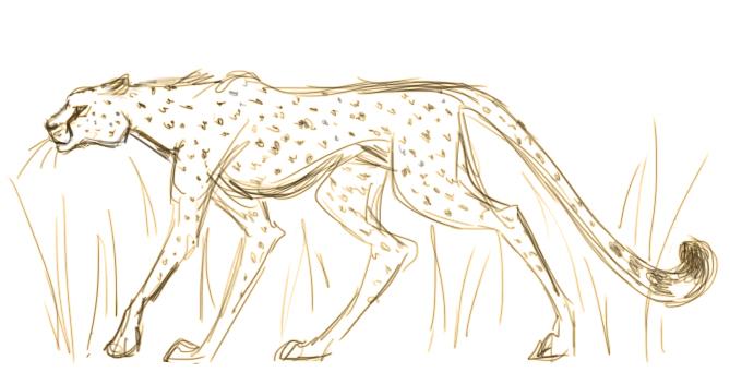 Cheetah Sketch by Inonibird