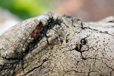 Scar Old Tree #2