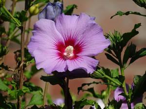Flower 20 by UdoChristmann