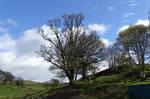 Rural Scottish landscape (2 )