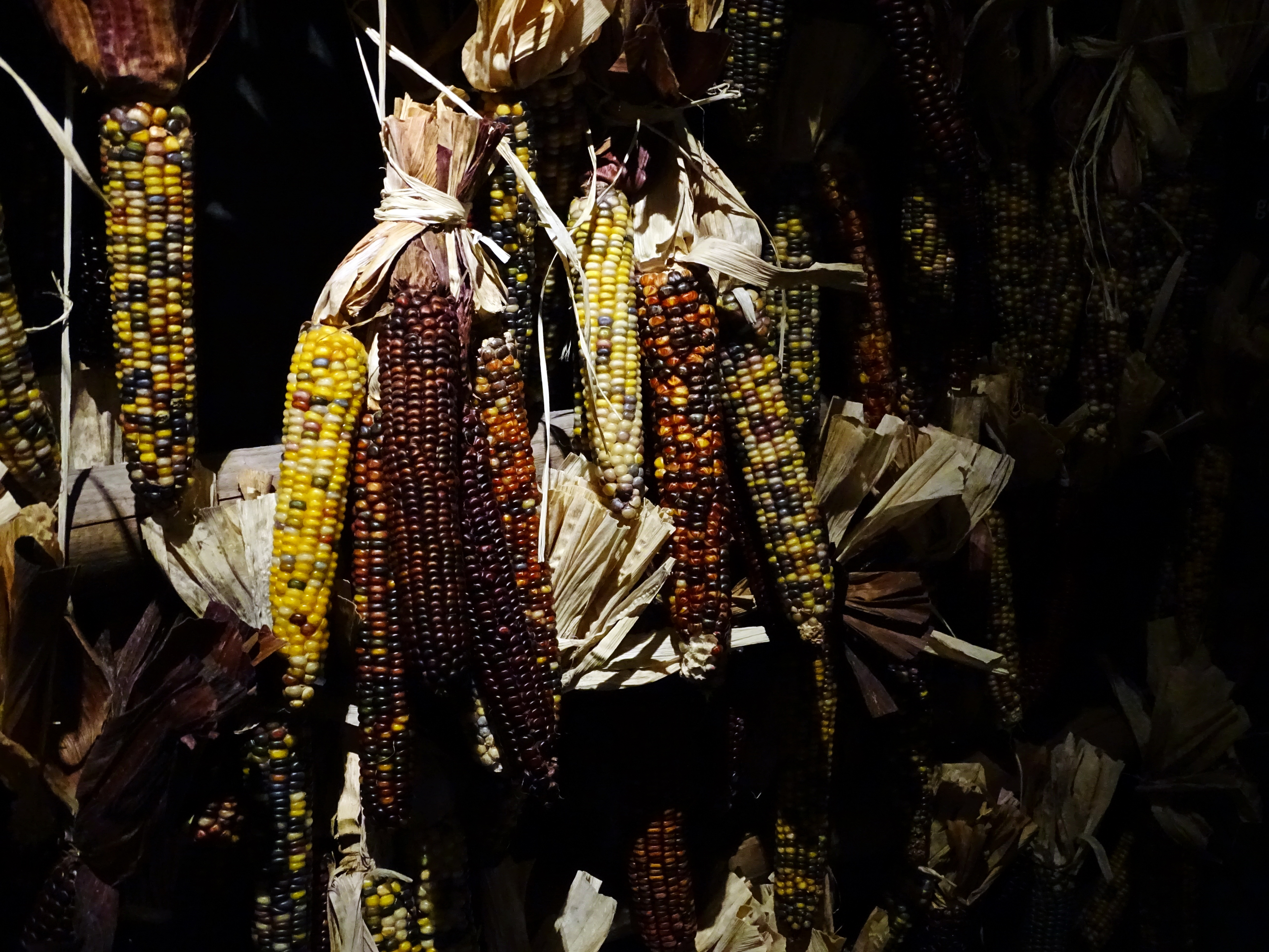 Dried corn ( brighter edit ) by UdoChristmann