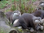 The otter gang ( 2 )