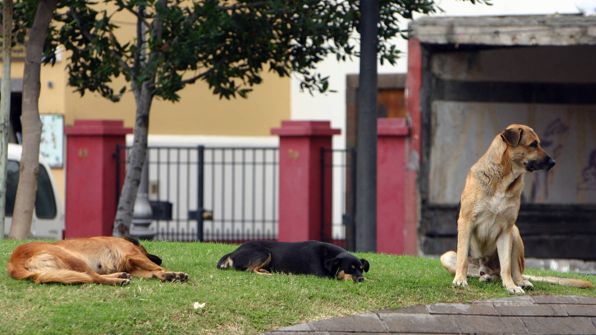 The sleepers and the watchdog by UdoChristmann