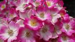 Flowers closeup