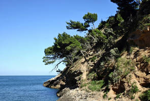 Coast with trees by UdoChristmann
