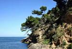 Coast with trees