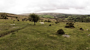 Dartmoor by UdoChristmann