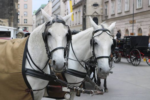 Carriage Horses 1