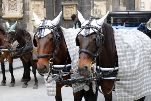 Carriage horses 2