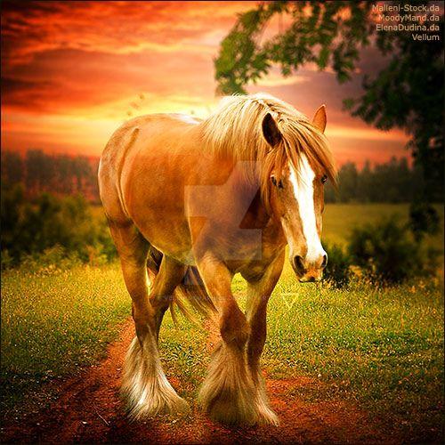 HEE Horse Avatar - Warriors Pride
