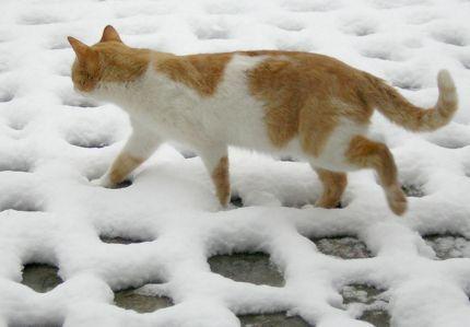 Orangecat by Miriadelasaguas