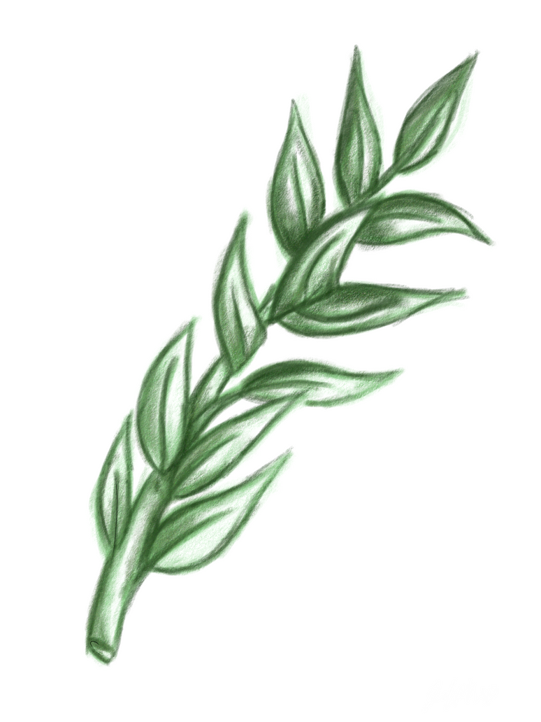Olive Branch Tattoo Design by Cartel-Pastel