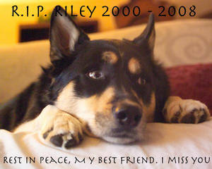Riley... a memorial of sorts