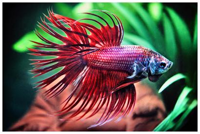zamo-eka's Profile Picture