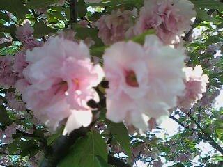 Pink Flowers 2 by Tomboysupergeek