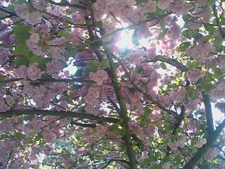 Pink Flowers 3 by Tomboysupergeek