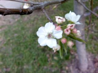 blooming 2 by Tomboysupergeek