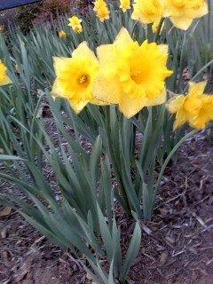 Yellow Spring by Tomboysupergeek