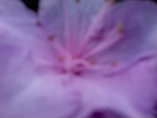 Close Up Pink Flower by Tomboysupergeek