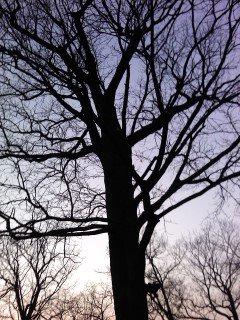 Sleeping Tree by Tomboysupergeek