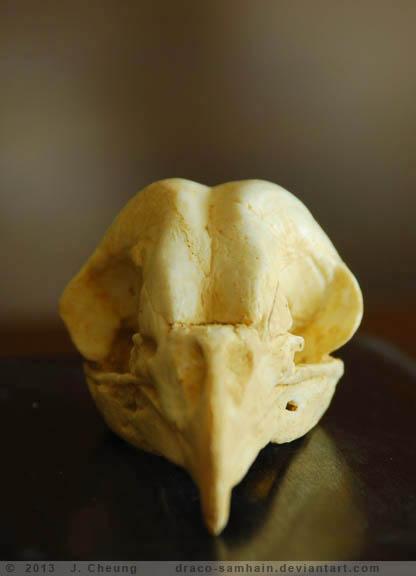 Resin Barn Owl Skull By Arcticphoenixstudios On Deviantart