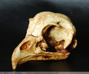 Cast resin barred owl