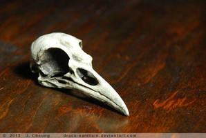 Cast resin crow skull- black patina