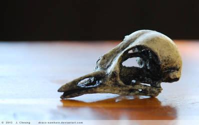 Cast resin robin skull