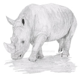 Rhino Pencil Sketch