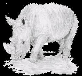 Rhino Pencil Sketch