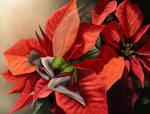Poinsettia Fairy