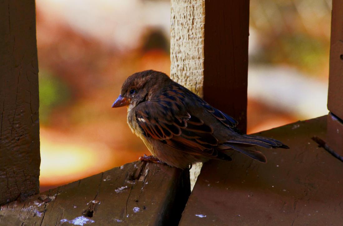 Birdy by sorryeyescansee