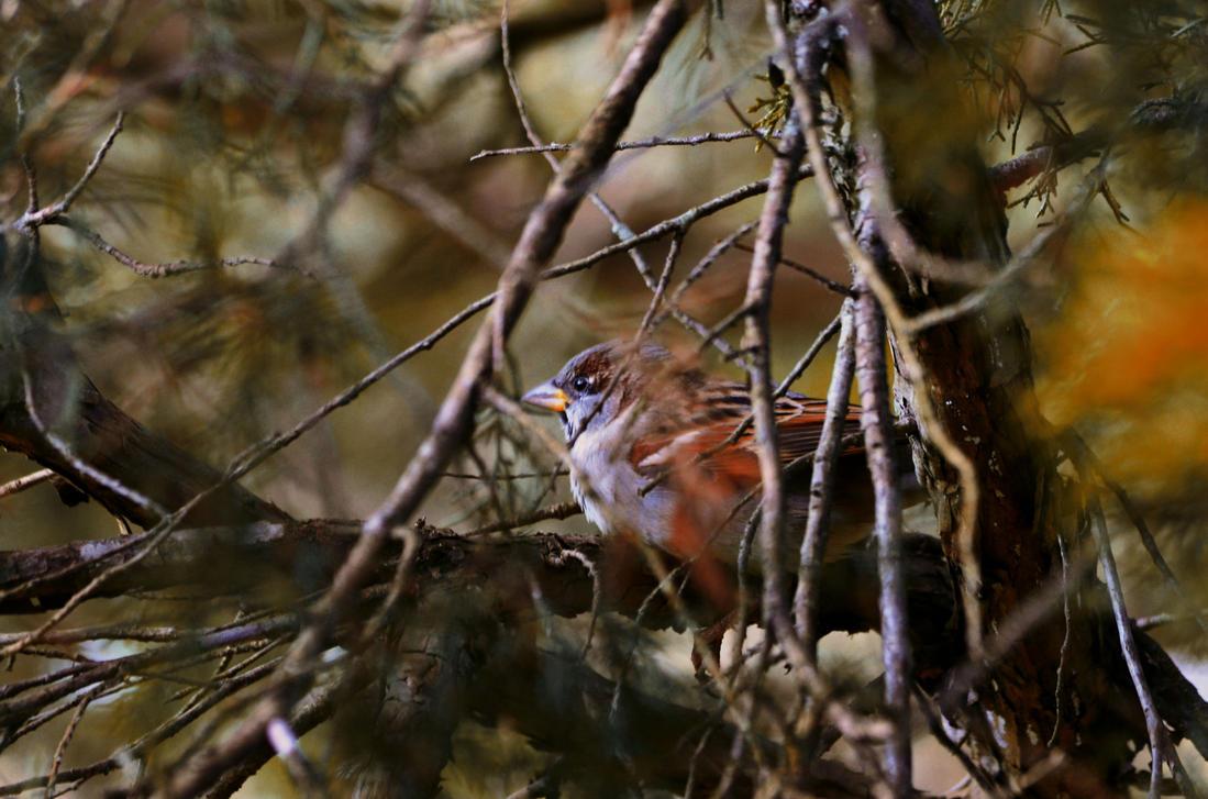 Bird by sorryeyescansee