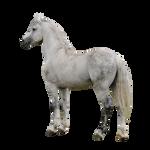 Grey horse precut and tack removal