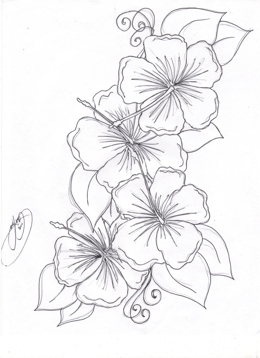 hibiscus flowers by closet case 808 on deviantart