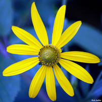 yellow petals of my life by rok993