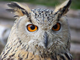 owl. by LidiaL