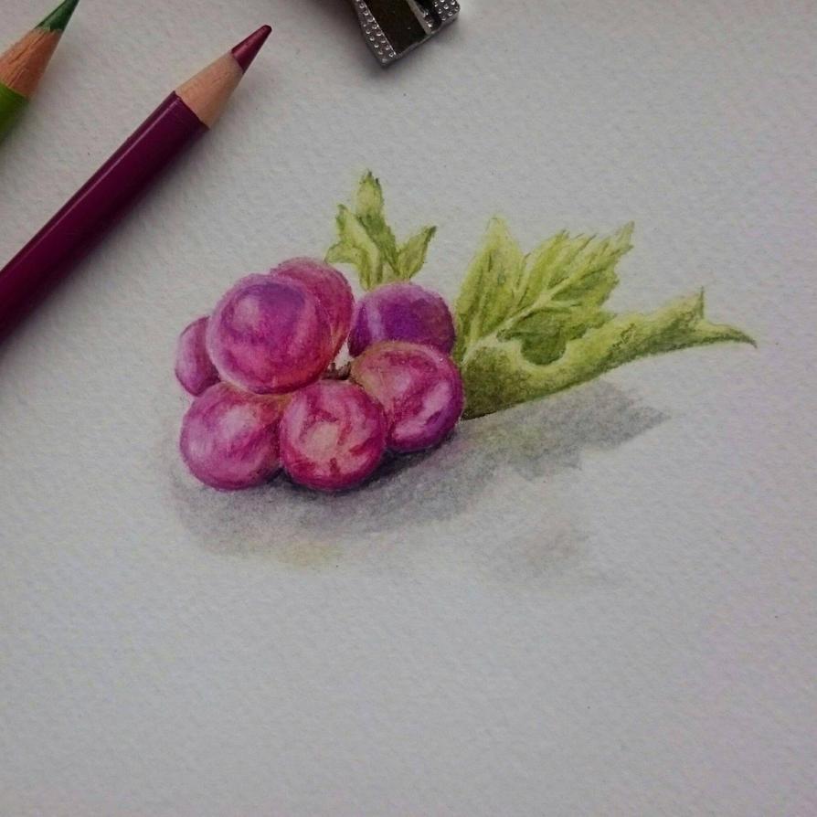 Grapes Study by Ansayla