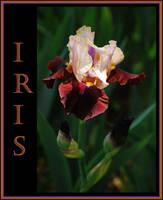 Iris II by TThealer56