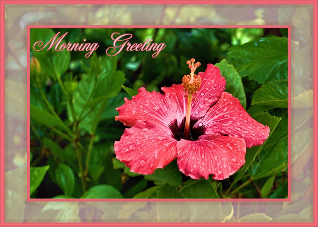 Morning Greeting by TThealer56
