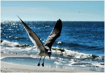 Landing Gull by TThealer56