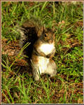 Squirreliness