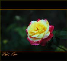 Koni's Rose